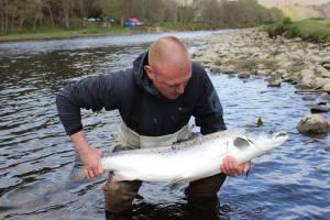 Tay salmon May